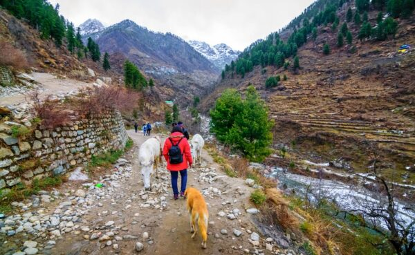 All about valley of flower trek