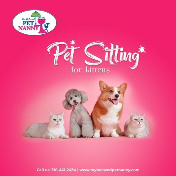 Amazing benefits of having a pet sitter